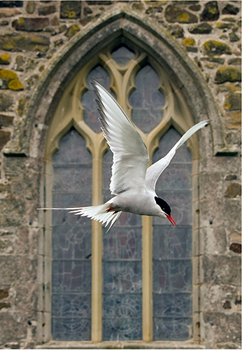 Old Building - Newer Tern
