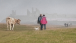 Misty morning walk - Dunstanburgh Castle
