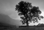 The Tree - Buttermere